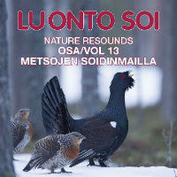 Nature Resounds 13 – In The Courtship Arena Of The Western Capercaillie